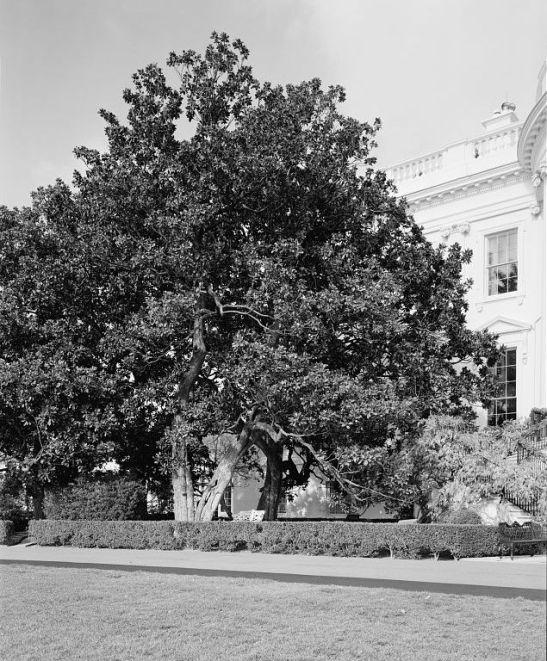 White House Jackson Magnolia History Resources Washington Dc